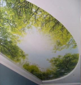 фотопечать деревья на потолке